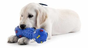 Best Chew Toys For Labs