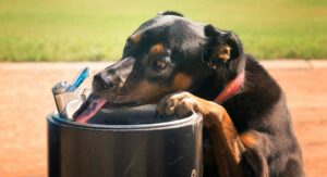 Best Dog Water Fountain - Top Dog Water Fountains Reviewed