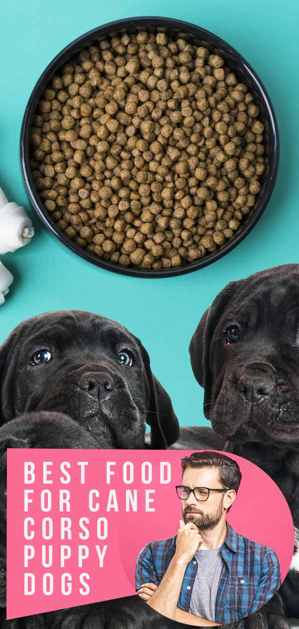cane corso puppy food