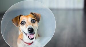 Dog Cone – Making the Best Choice for Your Injured Pet