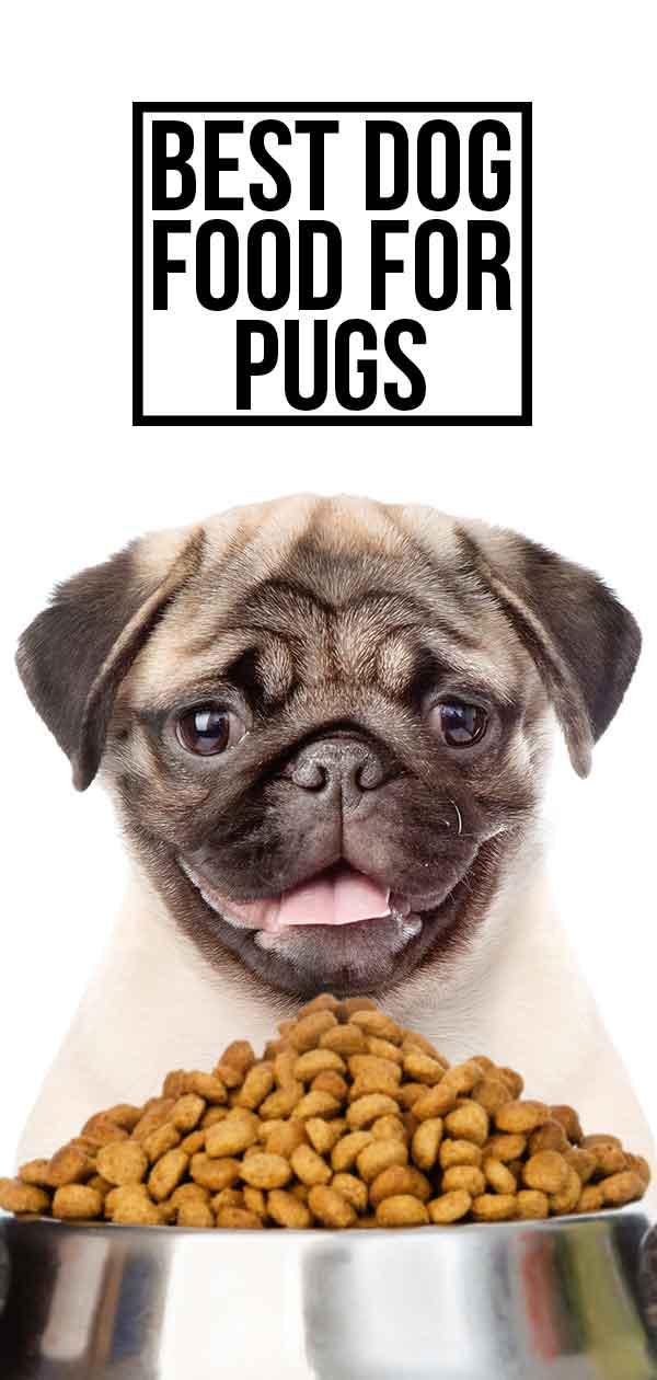 best pug food