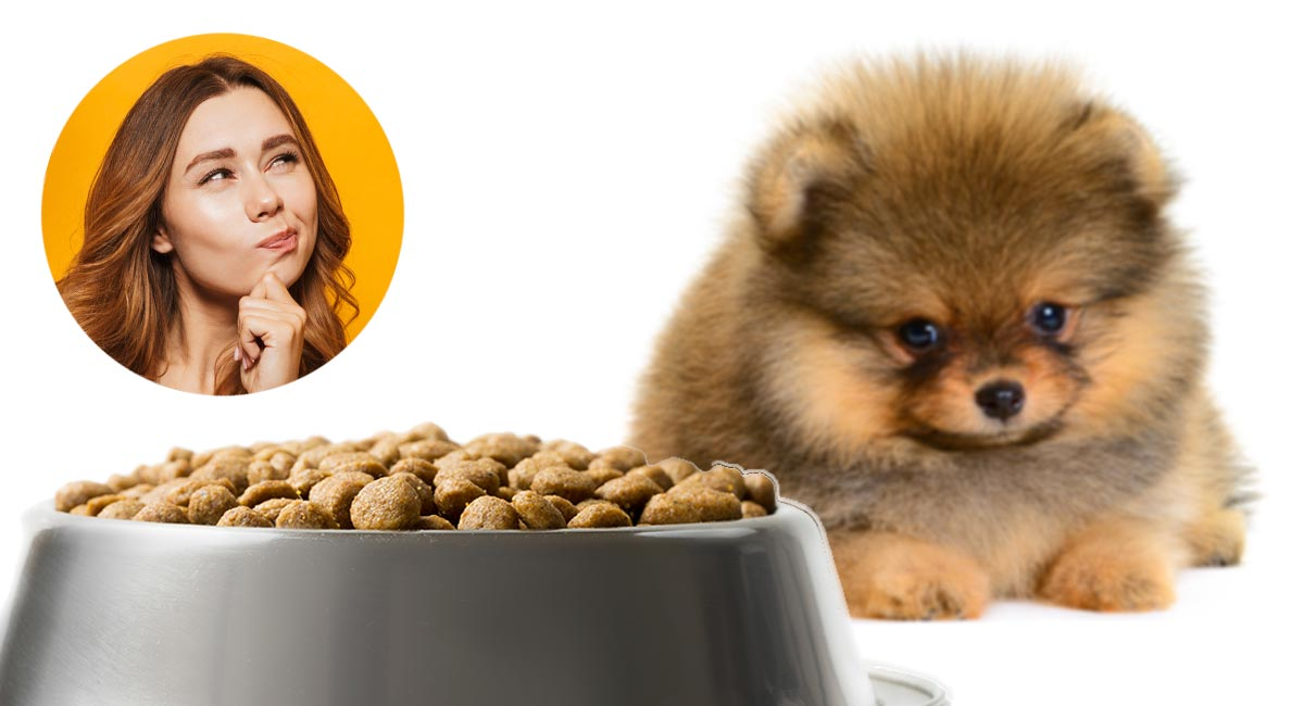 Best Food For Pomeranian Puppy Dogs What To Feed Your Pom Puppy