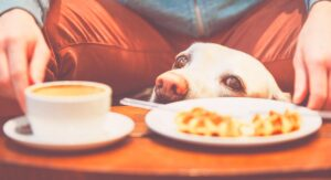 Can Dogs Drink Coffee Or Is It Dangerous To Share This Drink?