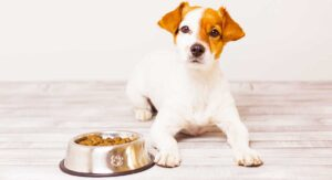 How Do I Get My Dog to Eat His Food?