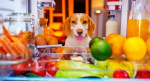 how do you stimulate a dogs appetite