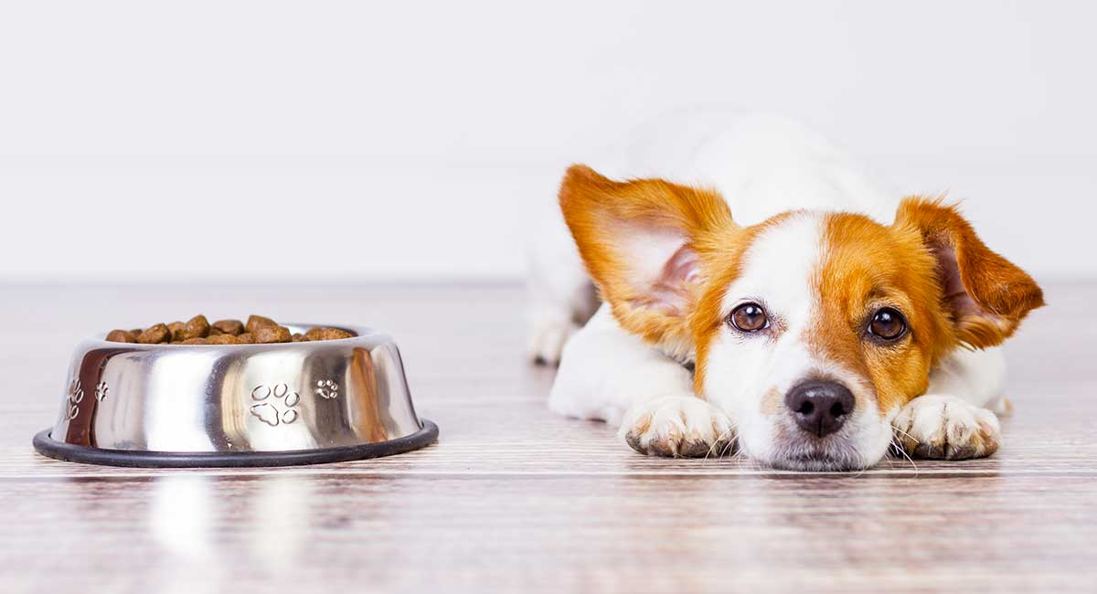 what causes lack of appetite in dogs