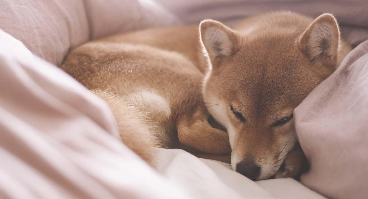 Japanese Dog Names Over 200 Dog Names Inspired By Japan