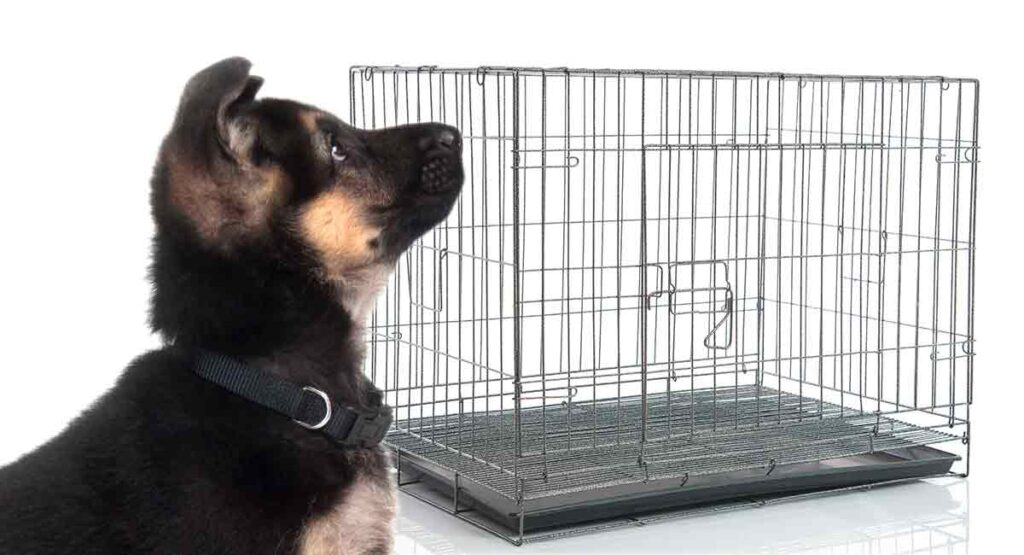 What Size Crate For A German Shepherd The Best Options Dogs