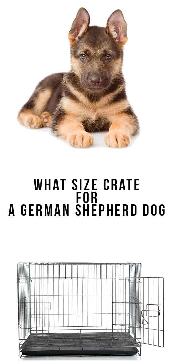 what size crate for a german shepherd