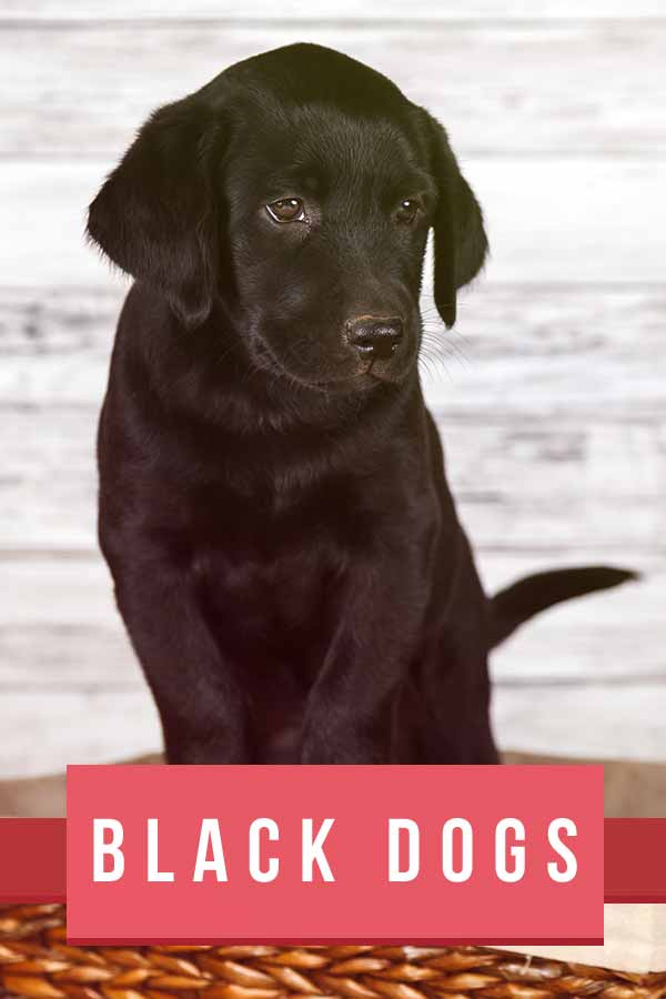black dog breeds