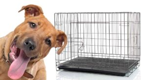 what size crate for a pitbull