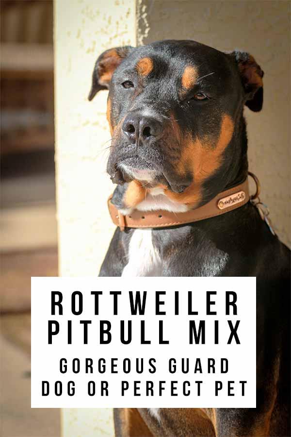 rottweiler pitbull mix