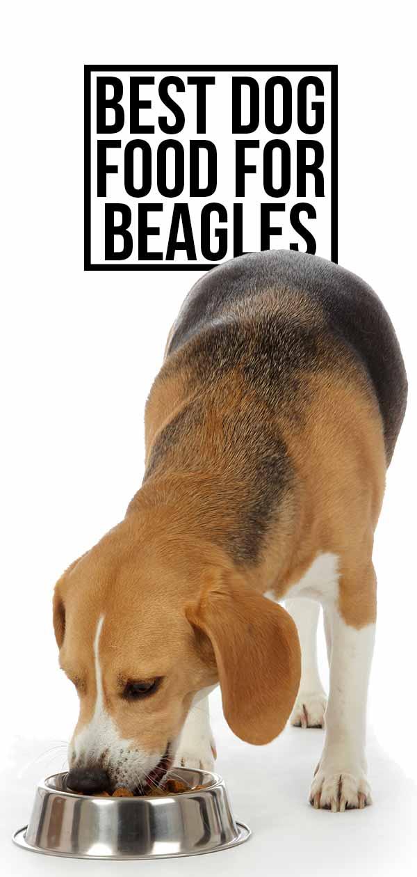 best dog food for beagles