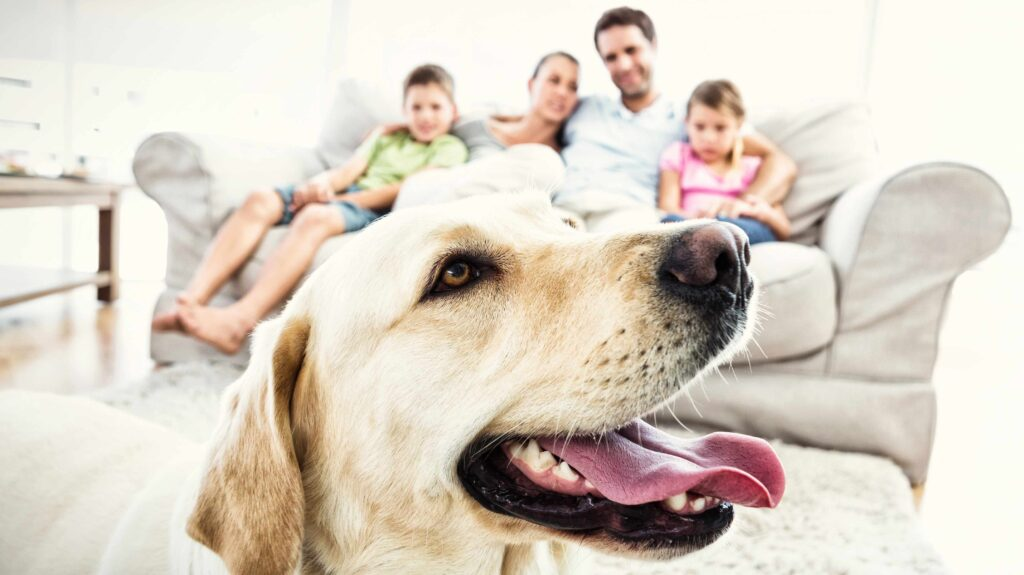 Labrador in front of family on couch
