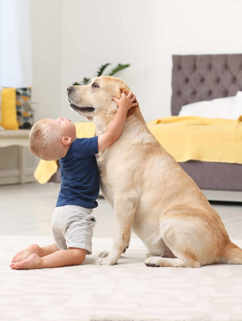 Young child upsetting a Labrador by pulling his ears