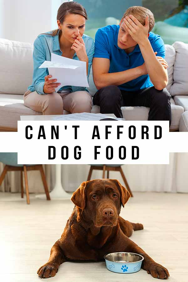 can't afford dog food