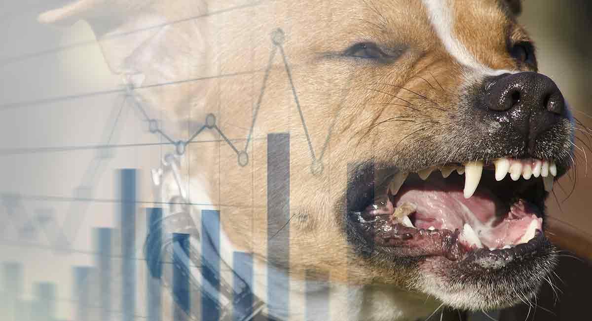 dog bite statistics