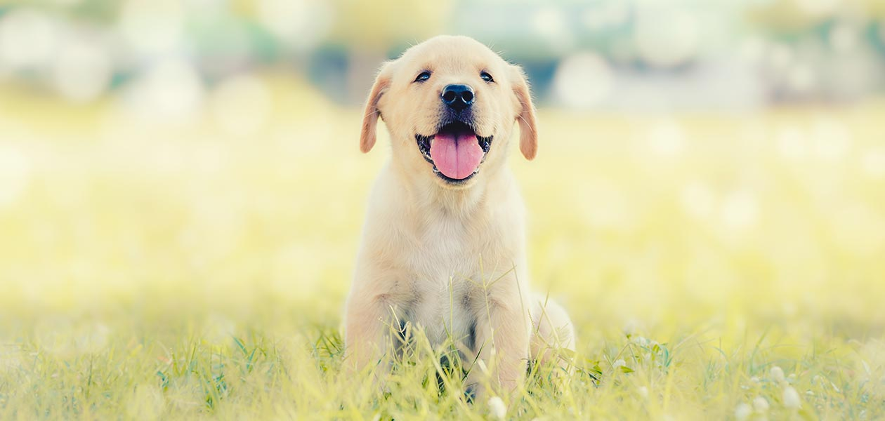 Female Dog Names Awesome Ideas For Gorgeous Girls
