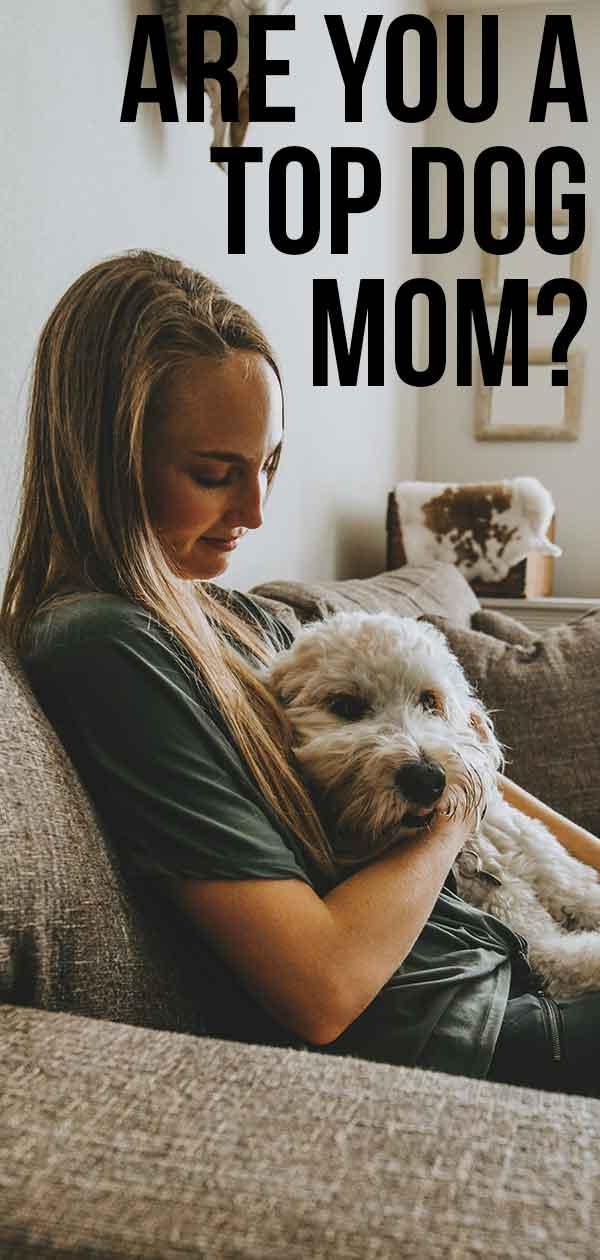 top dog mom