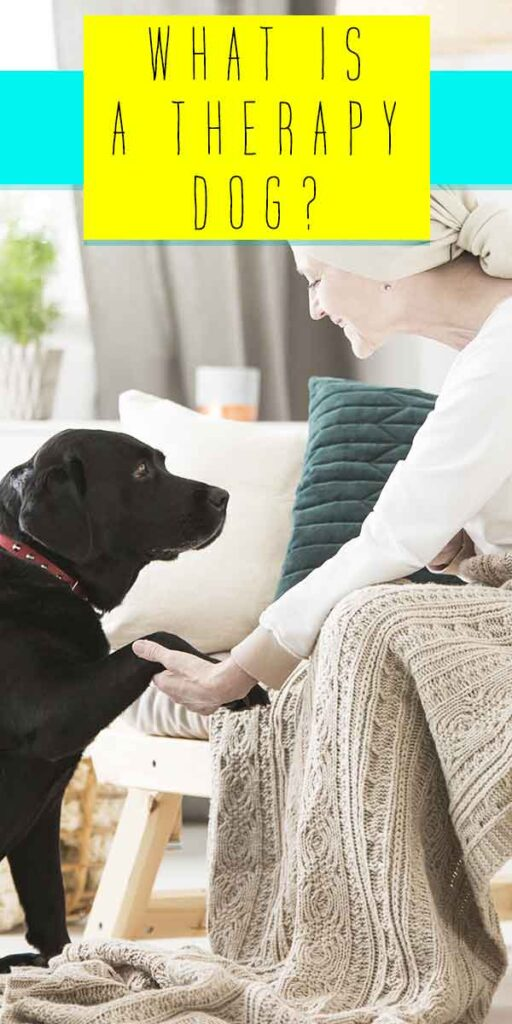 what is a therapy dog?