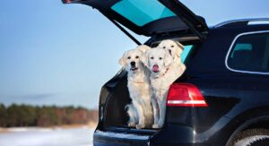 dog ramp for suv