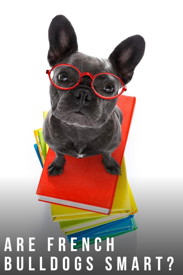 are french bulldogs smart