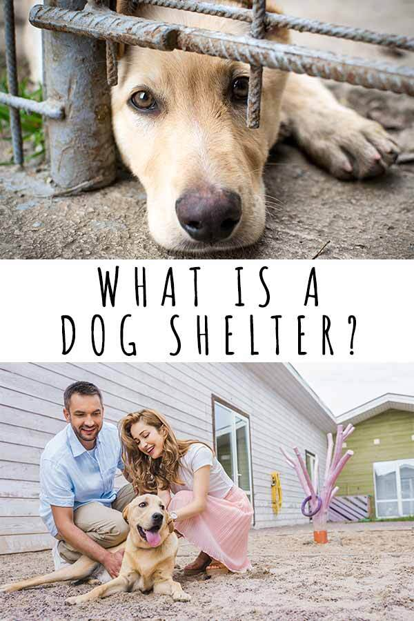 what is a dog shelter