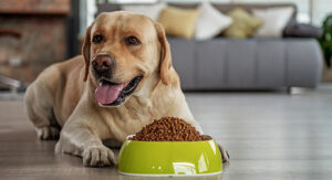 my dog is a picky eater, what can i do