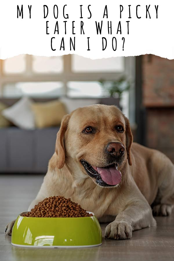 my dog is a picky eater what can i do