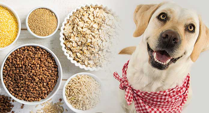 what is a good grain for dogs