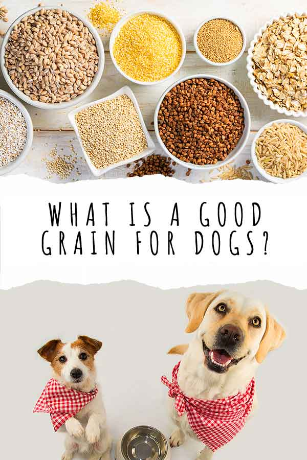 what grain is good for dogs