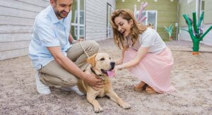 what is fostering a dog