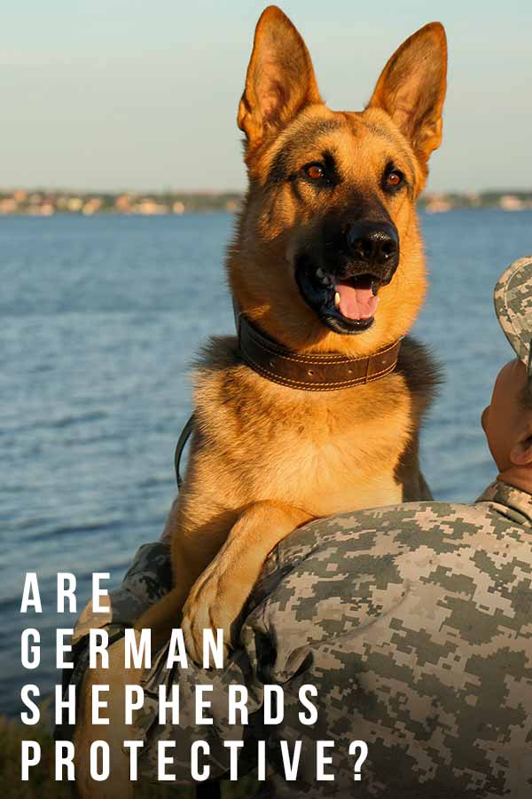 are german shepherds protective?