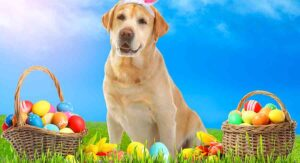 a dog surrounded by Easter eggs