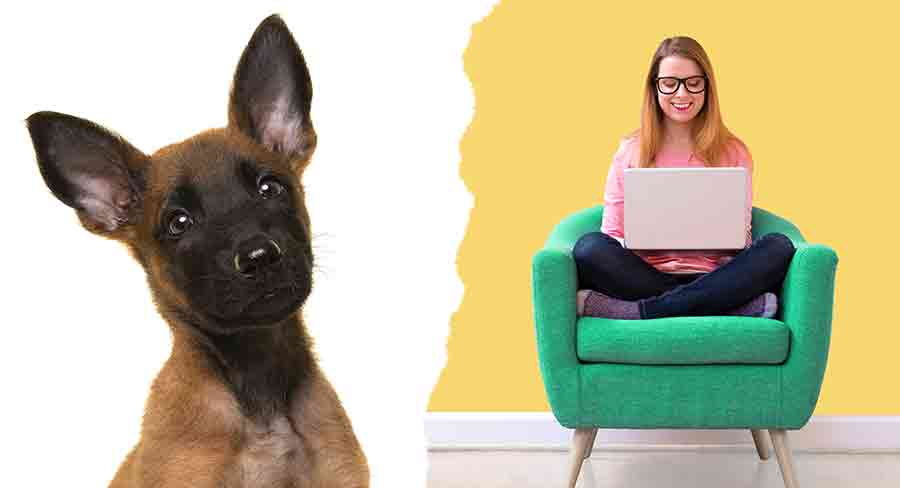 Finding A Belgian Dog Breed