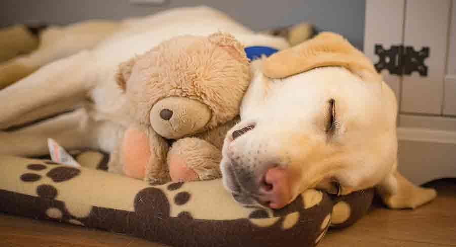 calming dog toys